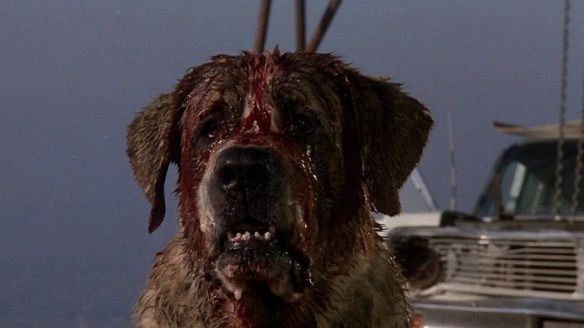 https---bloody-disgusting.com-wp-content-uploads-2014-05-cujo